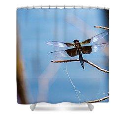 Merrill Creek Dragonfly Shower Curtain