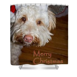 Merry Christmas From A Labrdoodle Card Shower Curtain