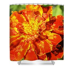 Merry Marigold Shower Curtain by Barbara S Nickerson