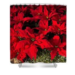 Merry Scarlet Poinsettias Christmas Star Shower Curtain