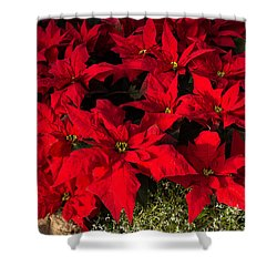 Merry Scarlet Poinsettias Christmas Star Shower Curtain