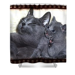 Mess With My Ma I'll Scratch Your Eyes Out Shower Curtain by Richard Thomas