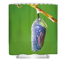 Metamorphosis Shower Curtain by Dawna  Moore Photography