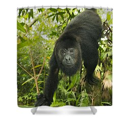 Shower Curtain featuring the photograph Mexican Black Howler Monkey Belize by Kevin Schafer