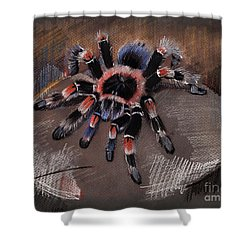 Mexican Redknee Tarantula Shower Curtain
