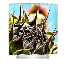 Mexican Sunflower Shower Curtain