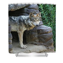 Mexican Wolf #2 Shower Curtain