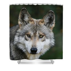 Mexican Wolf #3 Shower Curtain
