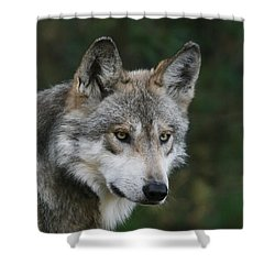 Mexican Wolf #4 Shower Curtain
