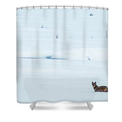 Michigan Coyotee  Shower Curtain by Optical Playground By MP Ray