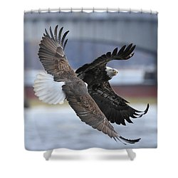 Shower Curtain featuring the photograph Mid Air Fight by Coby Cooper