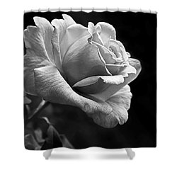 Midnight Rose In Black And White Shower Curtain
