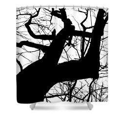 Shower Curtain featuring the photograph Mighty Oak by Carlee Ojeda