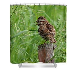 Mighty Sparrow Shower Curtain