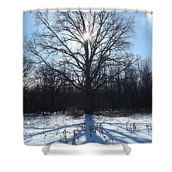 Mighty Winter Oak Tree Shower Curtain