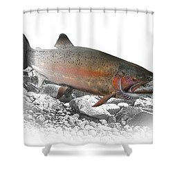 Migrating Steelhead Rainbow Trout Shower Curtain by Randall Nyhof