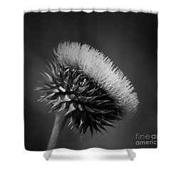 Milk Thistle Bw Shower Curtain
