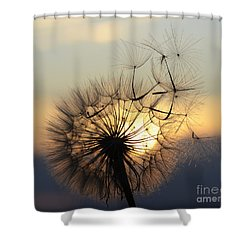Milkweed 5 Shower Curtain by Bob Christopher