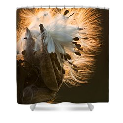 Milkweed Seed Pod Shower Curtain by Adam Romanowicz