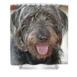 Shower Curtain featuring the photograph Milo by Lisa Phillips