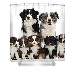 Miniature American Shepherd Dog Shower Curtain by Mark Taylor