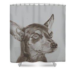 miniature pinscher Tronter Shower Curtain