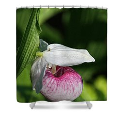 Minnesota's Wild Flower Shower Curtain