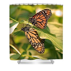 Shower Curtain featuring the photograph Mirror Image by Karen Silvestri