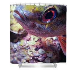 Miscellaneous Fish 5 Shower Curtain by Dawn Eshelman