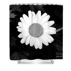 Miss Daisy Shower Curtain by Andrea Anderegg