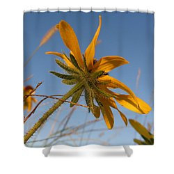 Shower Curtain featuring the photograph Miss Daisy by Joseph Skompski