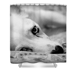 Shower Curtain featuring the photograph Miss Donut  by Faith Williams