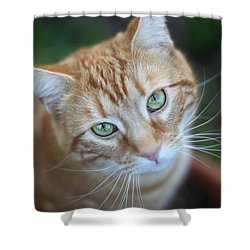 Miss Lucy Mcgillicuddy Shower Curtain by Melanie Lankford Photography