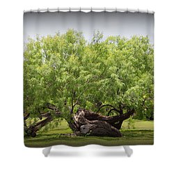 Mission Espada - Tree Shower Curtain
