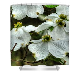 Shower Curtain featuring the photograph Mississippi Dogwood II by Lanita Williams