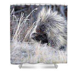 Shower Curtain featuring the photograph Mister Porcupine - Denali Alaska by Dyle   Warren