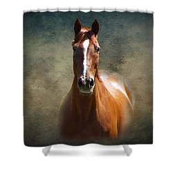 Misty In The Moonlight Shower Curtain by David Dehner
