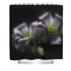 Misty Shamrock 2 Shower Curtain by Susan Capuano