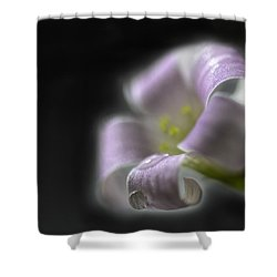 Misty Shamrock 3 Shower Curtain by Susan Capuano