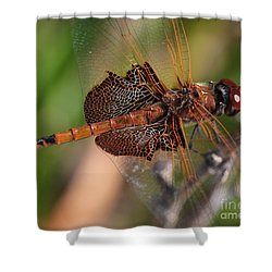Mocha And Cream Dragonfly Profile Shower Curtain by Kenny Glotfelty