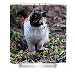 Shower Curtain featuring the photograph Mochi In The Garden by Laura Melis