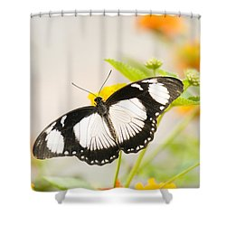 Mocker Swallowtail Shower Curtain by Anne Gilbert