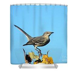 Shower Curtain featuring the photograph Mockingbird Looking Good by Lizi Beard-Ward