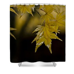 Moist Yellow Shower Curtain