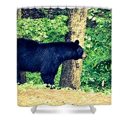 Shower Curtain featuring the photograph Momma Bear by Jan Dappen