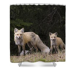 Momma Fox With Her Kit Shower Curtain