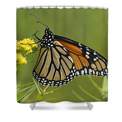 Monarch 2014 Shower Curtain