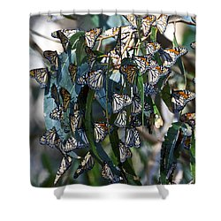 Monarch Butterflies Natural Bridges Shower Curtain