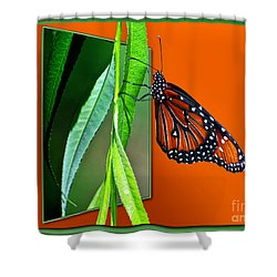 Monarch Butterfly 01 Shower Curtain by Thomas Woolworth