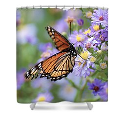 Monarch Butterfly 3 Shower Curtain